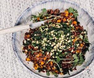 SQ-Food-bowl-300x300
